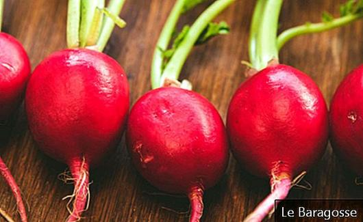 Reddik: Mer farge og smak på salater og helsemessige fordeler
