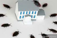 Съвети за да се отървете от хлебарки