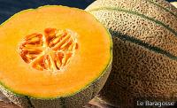 Cantaloupe Melon: 6 Benefits That Make This Fruit Worth Your Attention