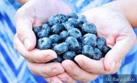 Blueberry: Know the benefits of this good fruit