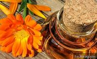 16 Amazing Benefits Of Marigold Oil And How To Use It In Everyday Life